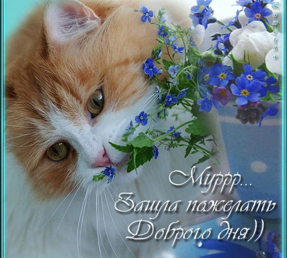 Добрый день картинки с котами