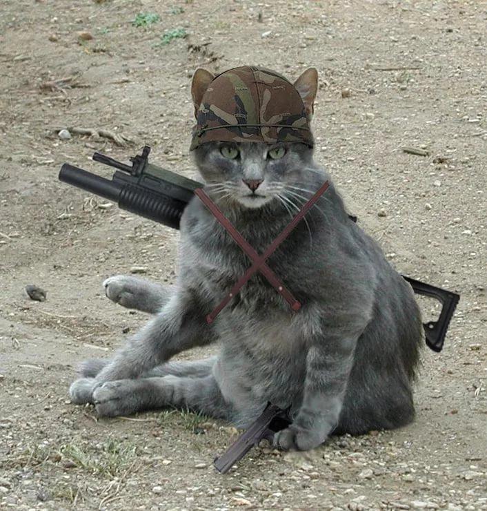 картинки боевых кошек жена, пускай
