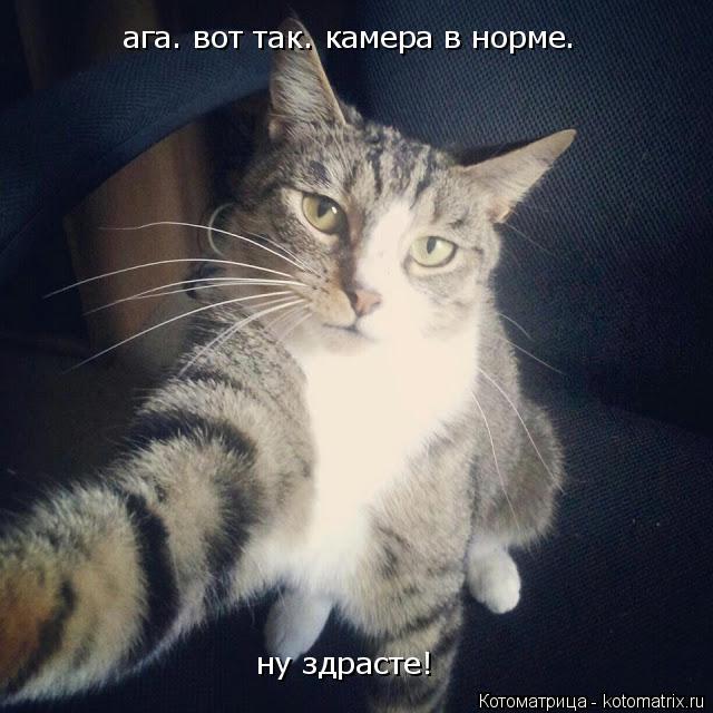 kotomatritsa_1.jpg