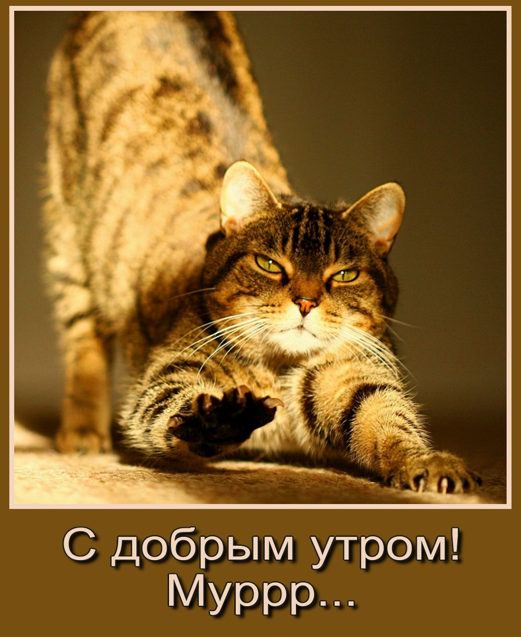 krasivye-otkrytki-kartinki-s-dobrym-utrom-chast-5-aya-9.jpg