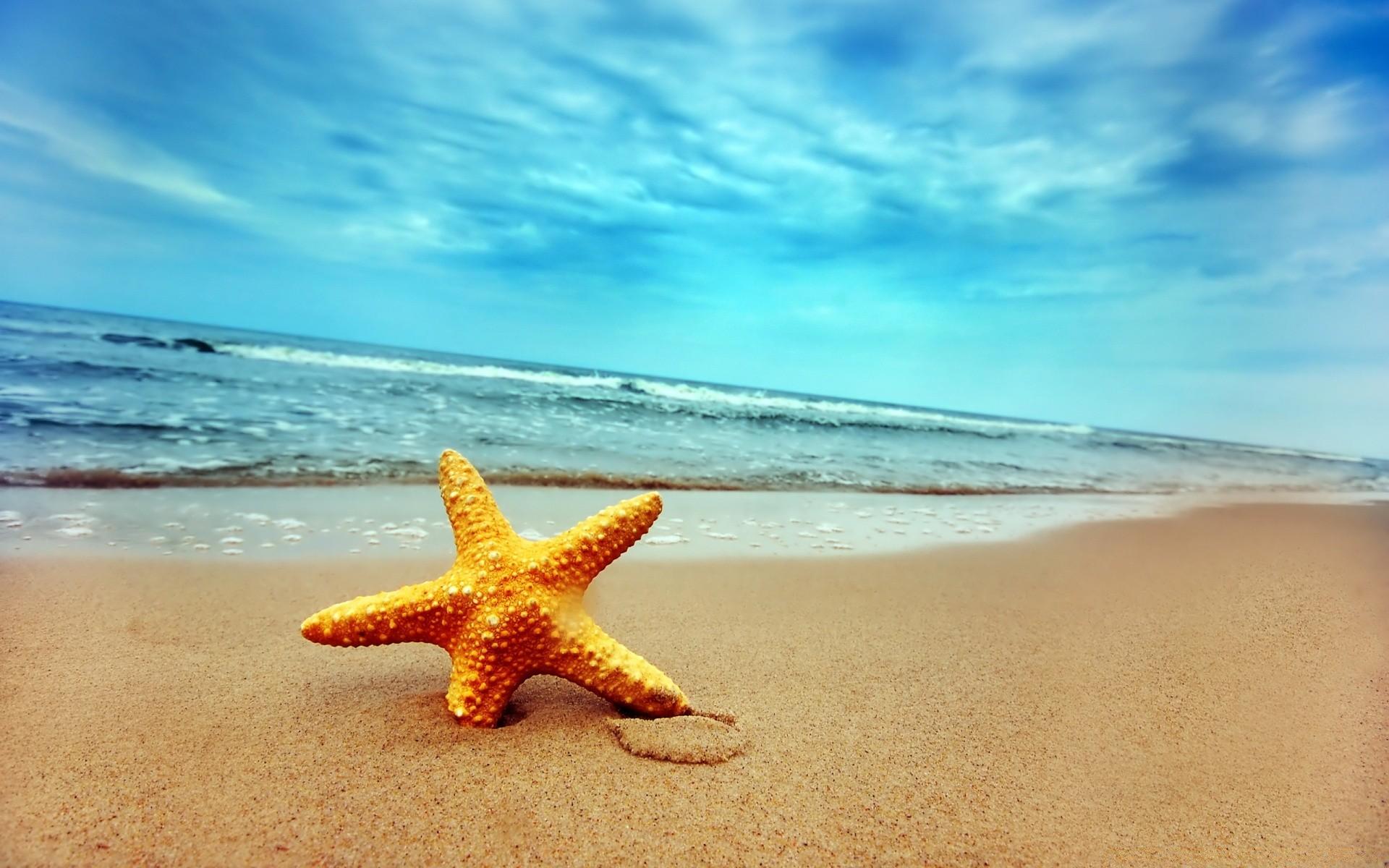 morskaya-zvezda-na-plyazhe.jpg