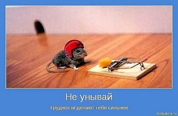 мышь-ловушка.jpg