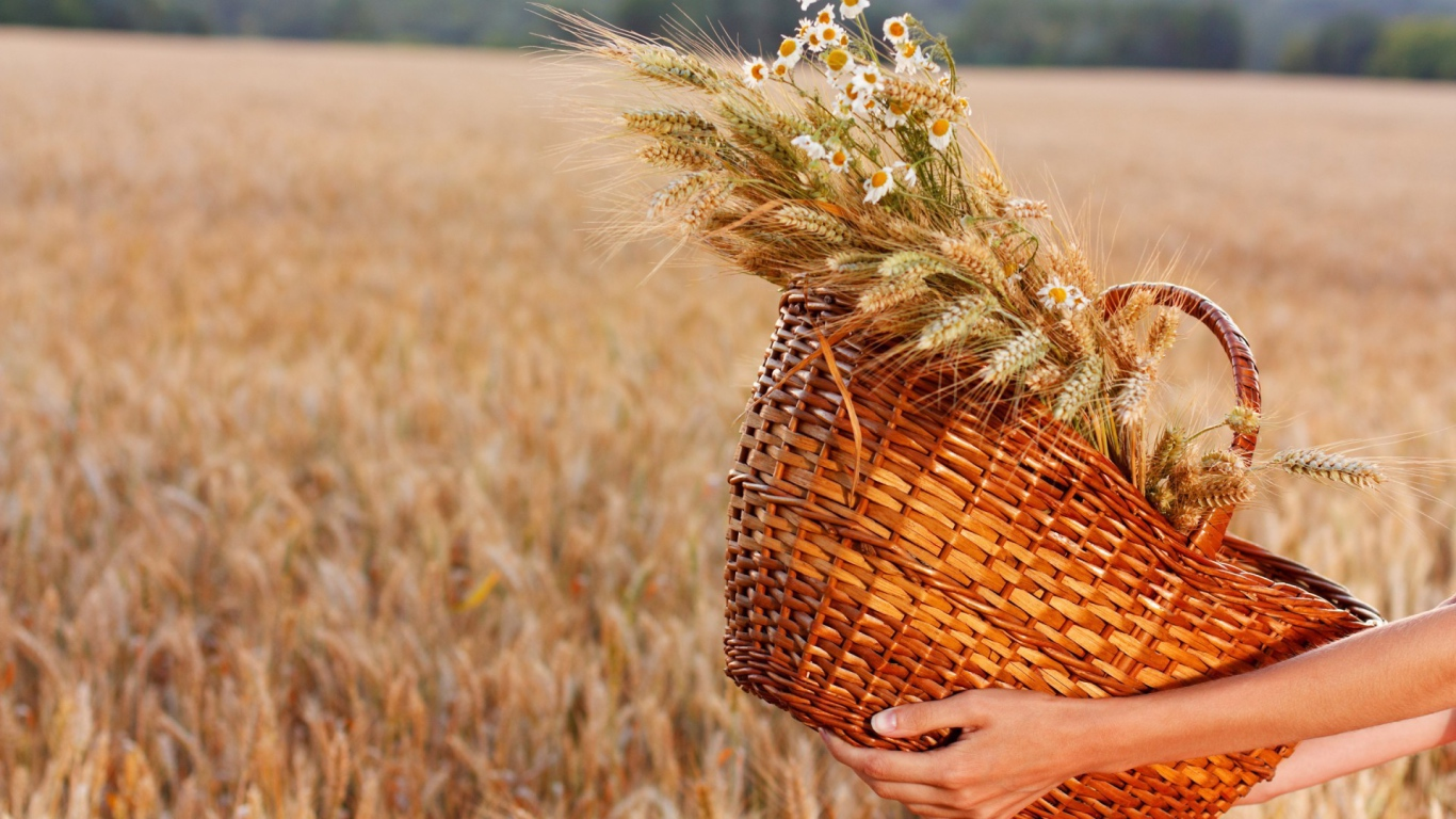 Nature___Plants_Spikelets_and_chamomile_in_a_straw_basket_105703_24.jpg