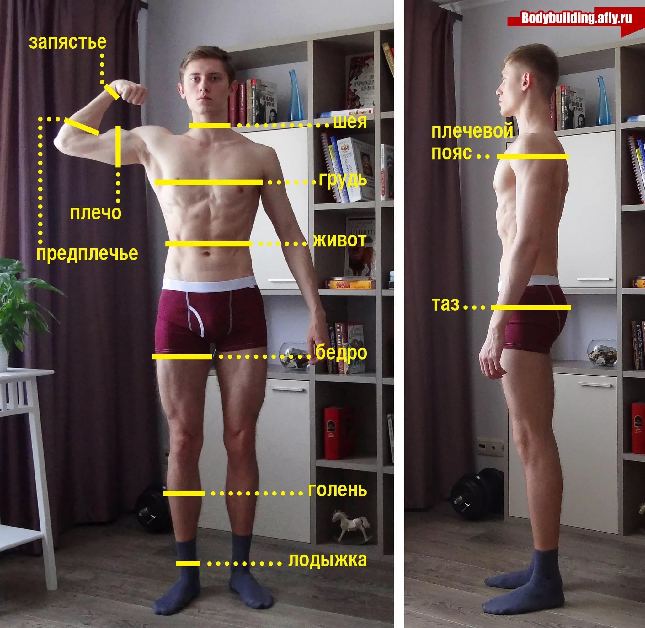как измерить предплечье фото только три лозы
