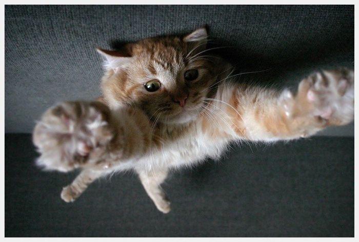 На ручки котенок картинки