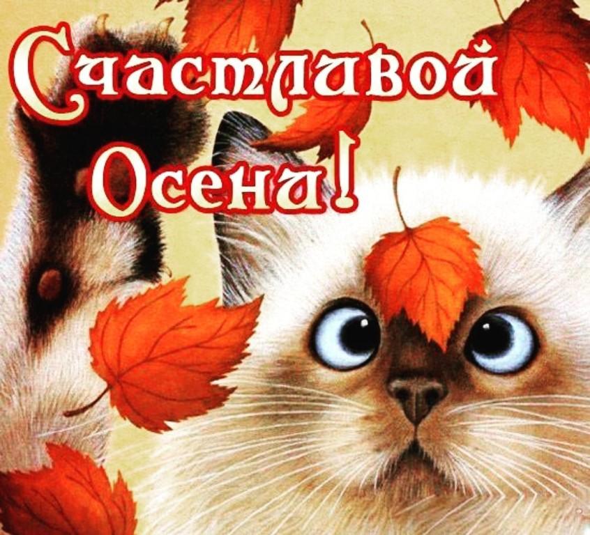 Смешные картинки, поздравления с осенью в открытках