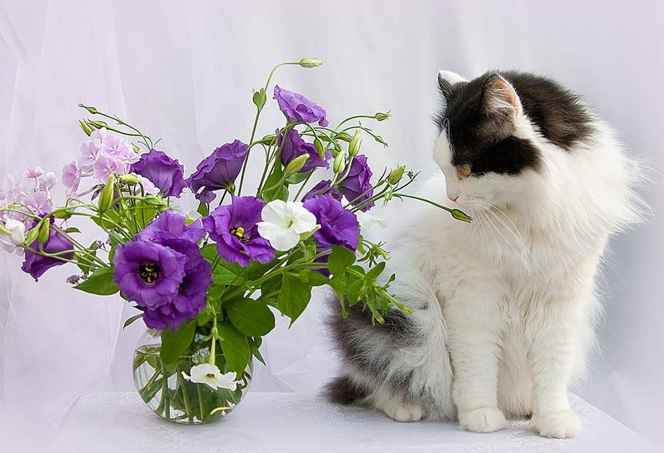 Открытка котик и цветы