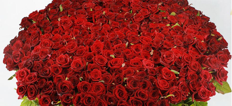 покидают фото огромный букет алых роз чудесные