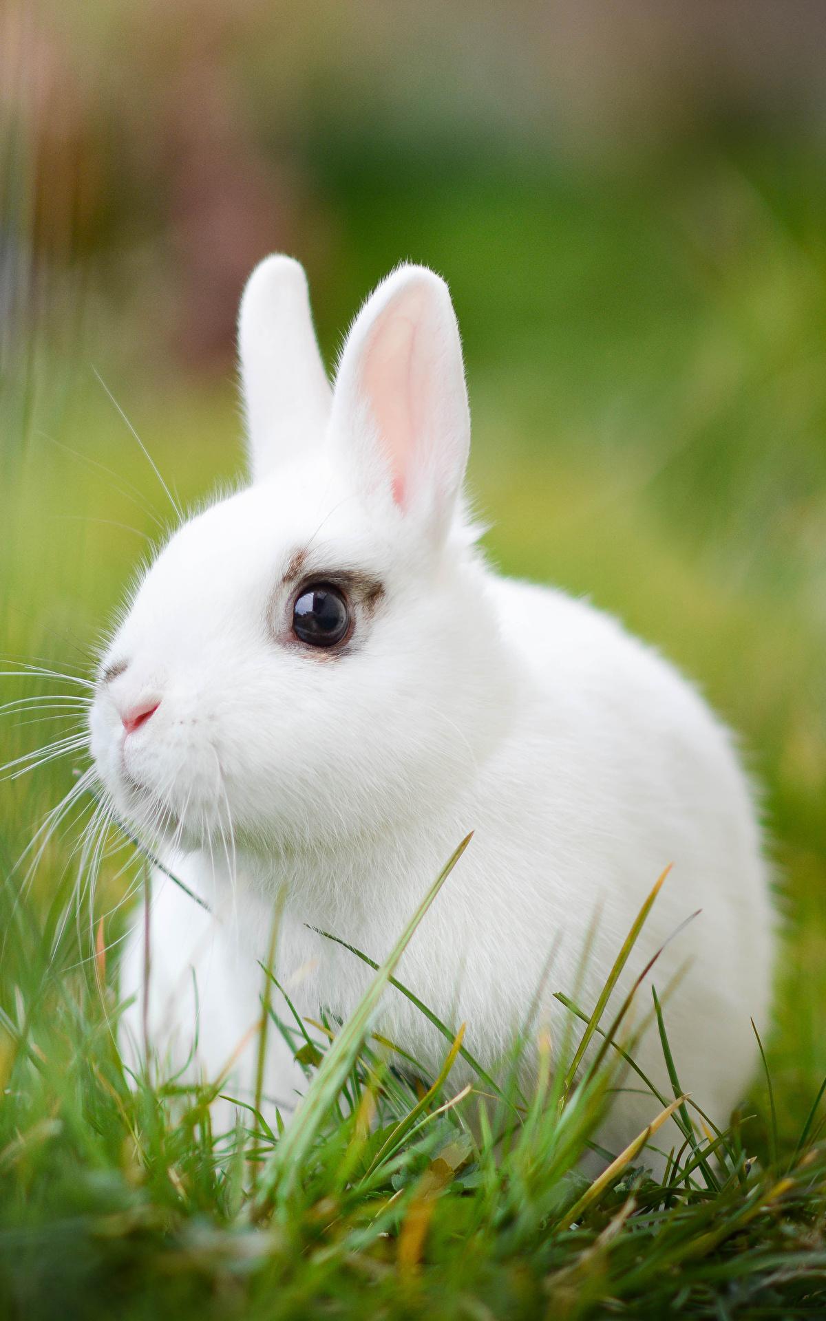 Rabbits_Grass_511940_1200x1920.jpg