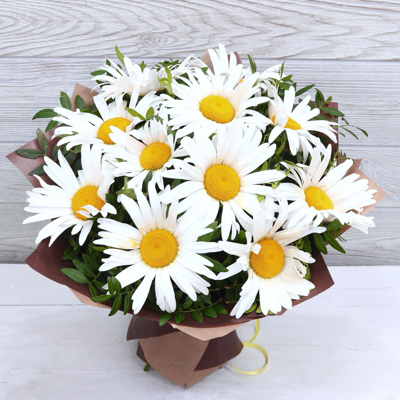 Фото цветов ромашки к дню рождения