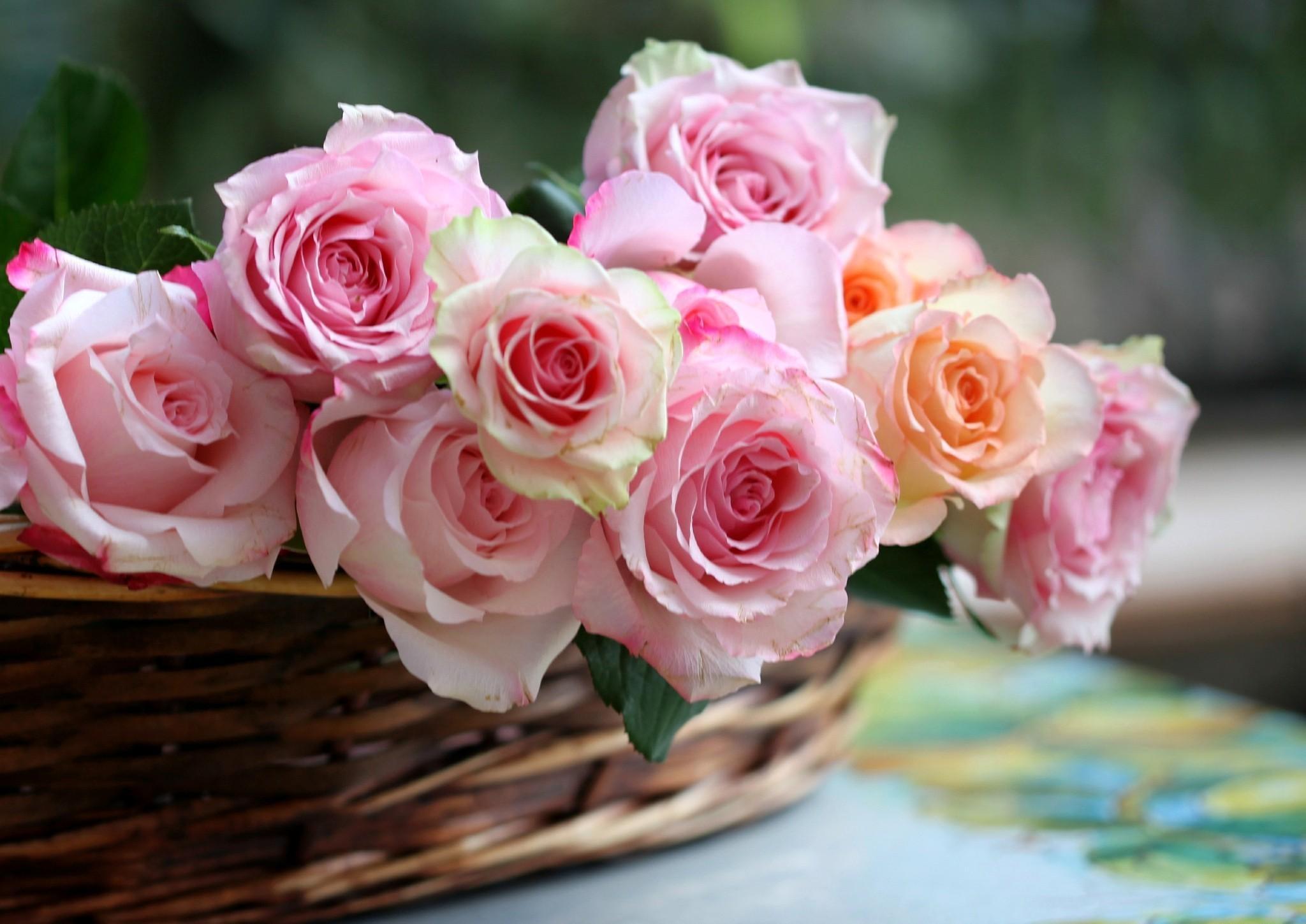 roses-basket-flowers-buds-648356.jpg