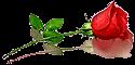 роза.png