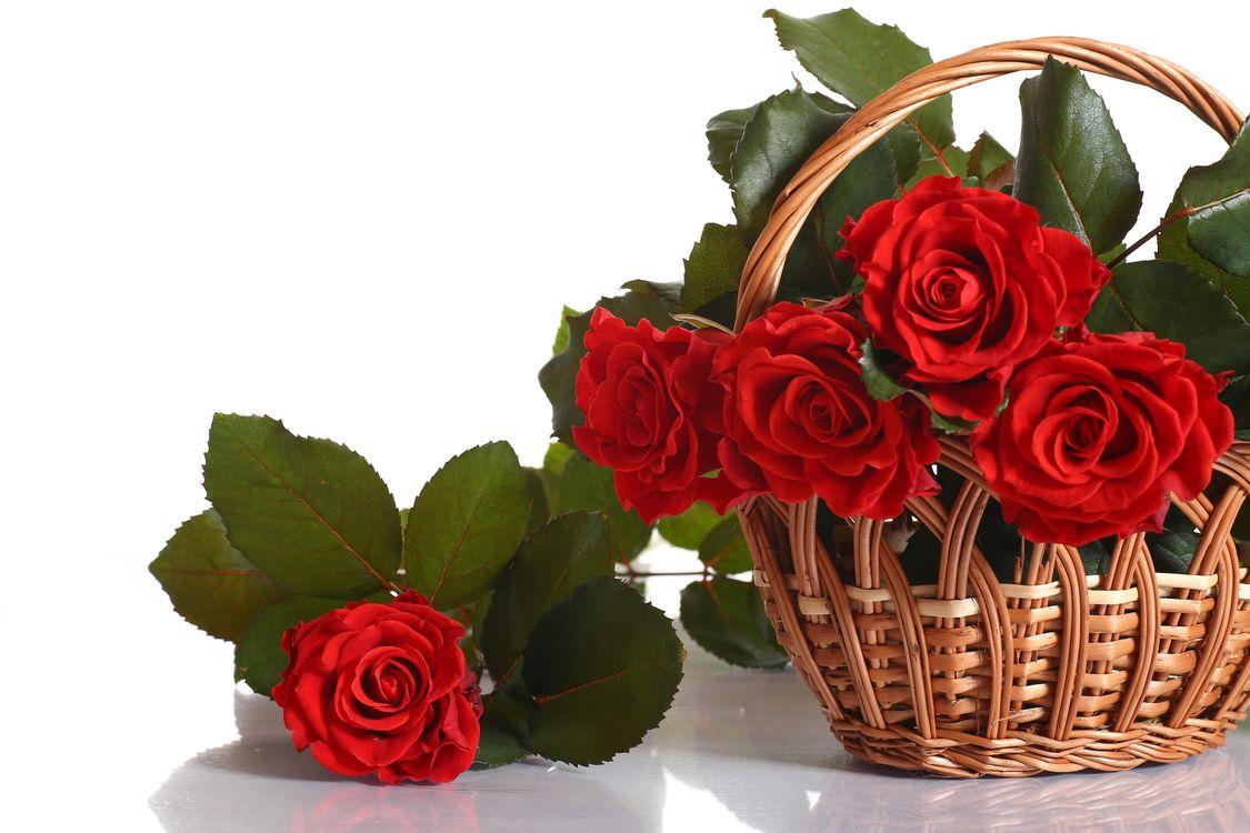 rozy-roza-cvetok-cvety-vgch.jpg