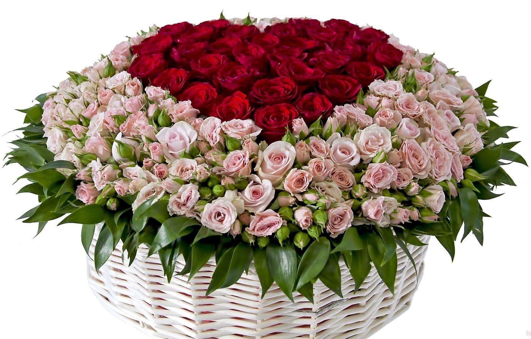 розы4.jpg