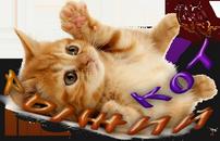 Рыжий кот4.png