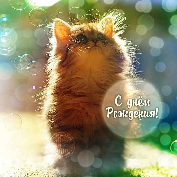 поздравления с днем рождения картинки котики