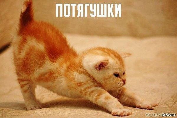 SDnem-rozhdeniya_ru-430.jpg