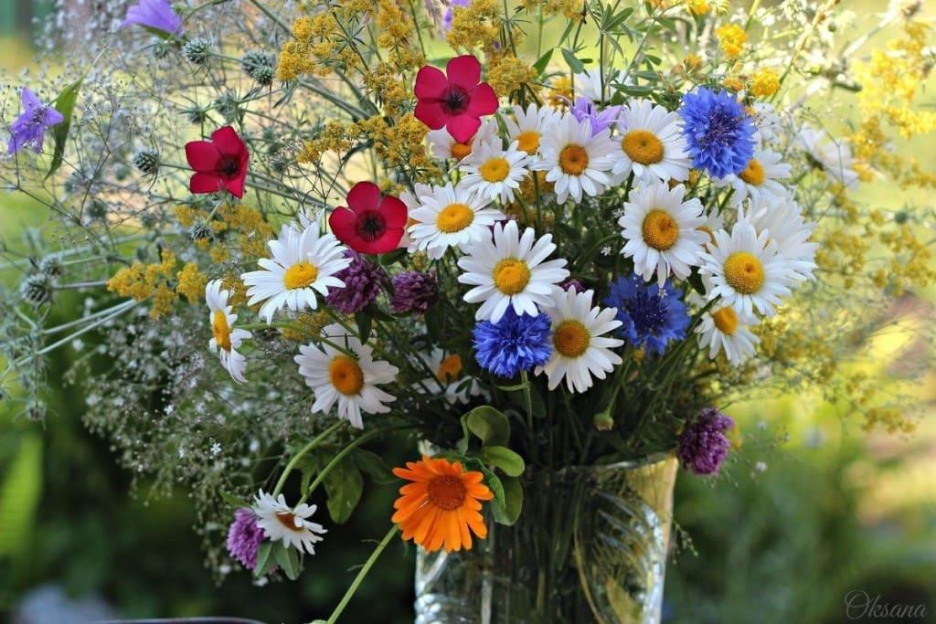 Красивые цветы для поздравления фото нас