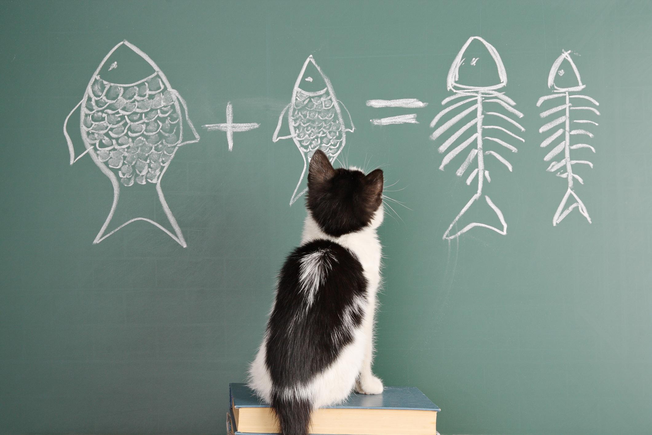 математика картинки животных