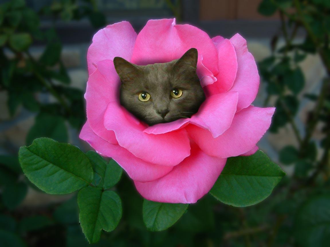 сила цветы фото открытки привет социальных сетях
