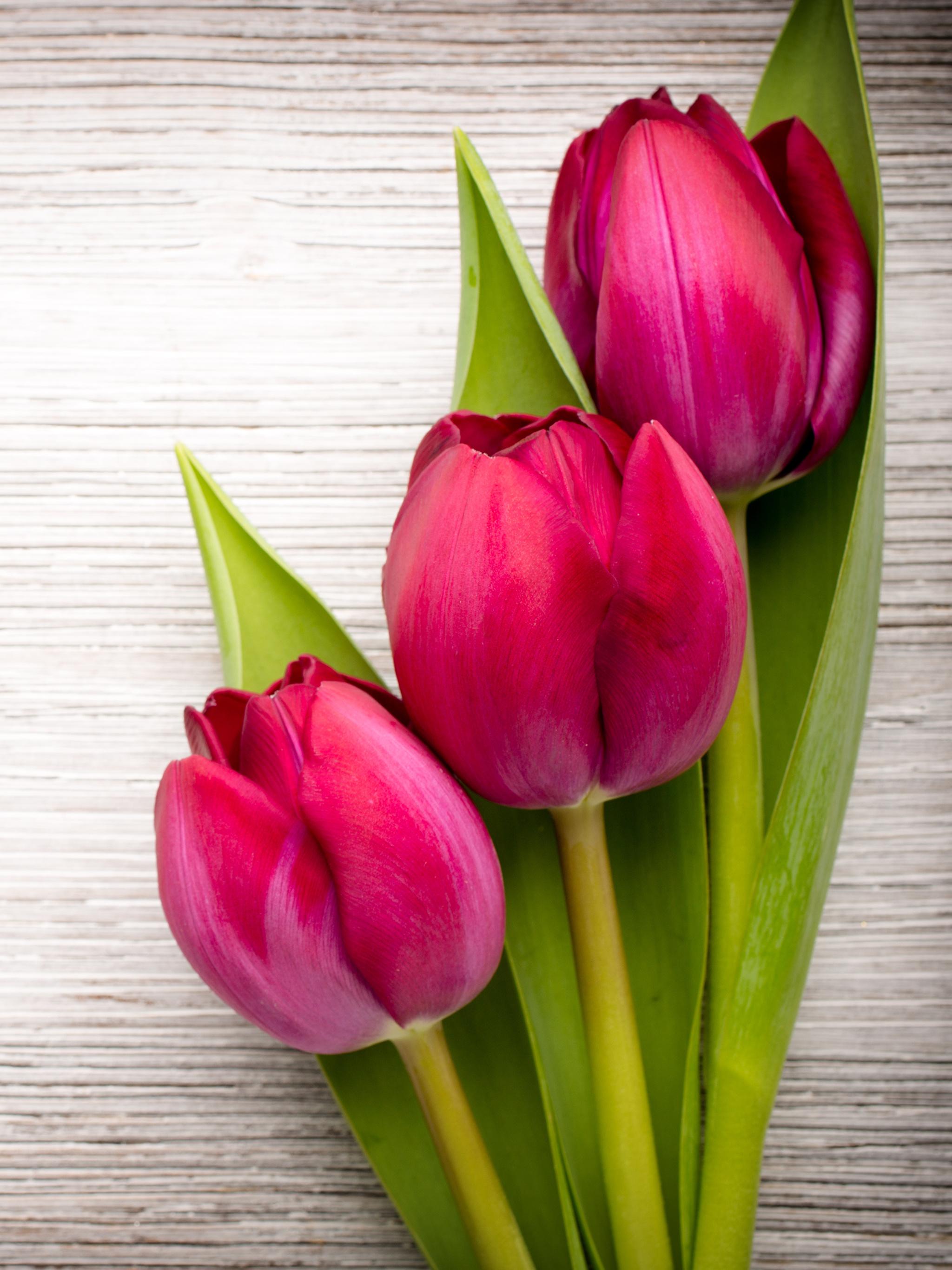 Tulips_Closeup_Wood_planks_Three_3_Red_536317_2048x2732.jpg