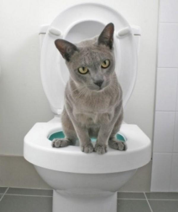 Что есть чтобы хорошо ходить в туалет