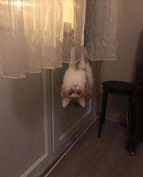 Batcat.jpg