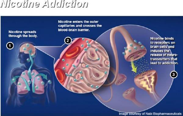 Сколько никотин держится в моче